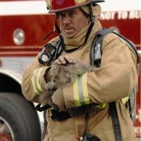 Cat-Rescue